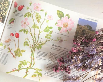 Guide to Wild Flowers, Reader's Digest
