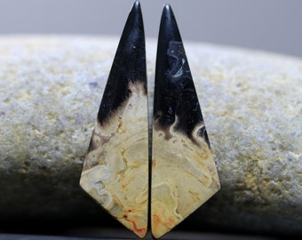 Birds Eye Agate Fossilized Root Palm Wood Fossil Pair