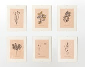 Serra Fora set of 6 botanical plants art illustration, watercolor and gold foil original framed art, vintage peach pink paper background