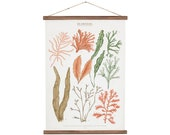 Seaweeds marine illustration Poster - cotton canvas handmade educational chart, red and pink botanical watercolor art print