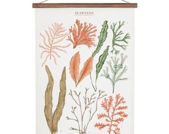 Seaweeds Poster - cotton canvas handmade vintage inspired educational chart illustration bedroom decor art print ALP2002