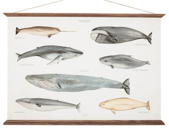 A2 Whales Poster Canvas - medium size - handmade vintage inspired illustration educational wall chart watercolor paint art print wall decor