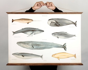 LARGE A1 Whales Canvas poster - science animal illustration educational sea animal art print watercolor painting