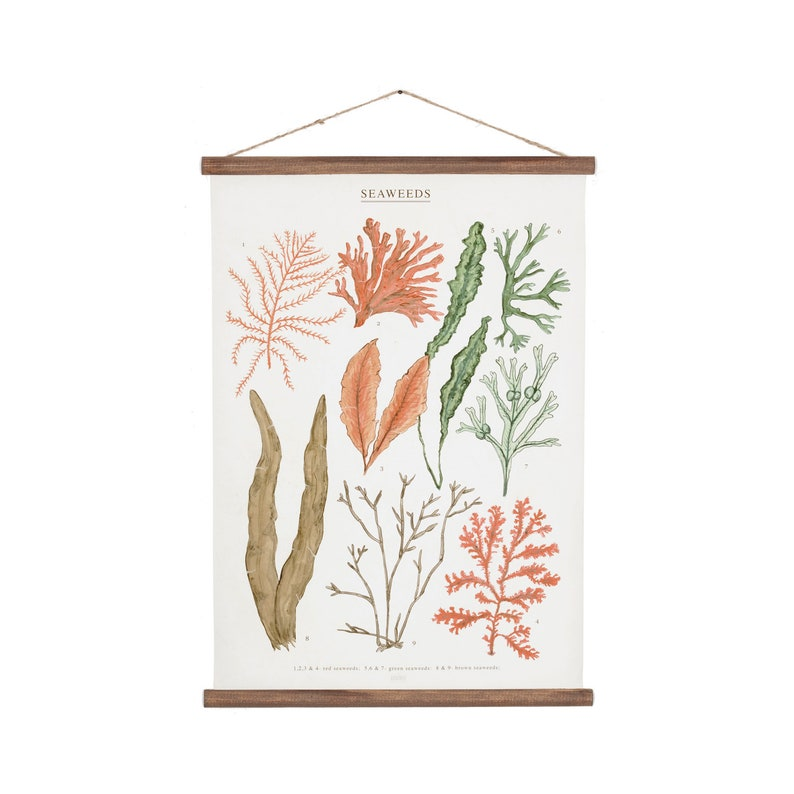Seaweeds marine illustration Poster  cotton canvas handmade image 0