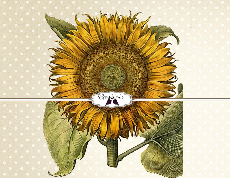 graphic regarding Sunflower Printable identify Sunflower printable image fast Electronic obtain picture for sbook decoupage iron upon cloth go towards burlap tote pillows 2154