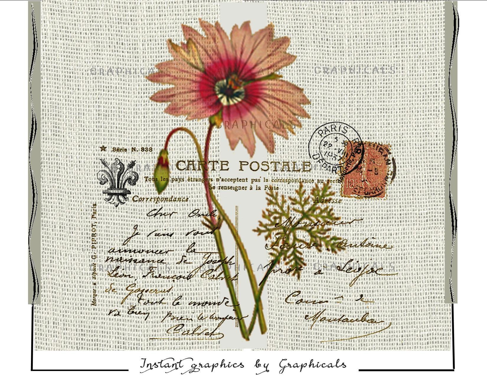 Paris Postcard Daisy Flower Vintage Instant Art Digital Etsy