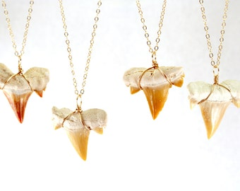 Build Your Own Fossilized Shark Tooth Necklace, Gold Shark Tooth Necklace Rose Gold Shark Tooth Pendant Sterling Silver Shark Tooth Necklace