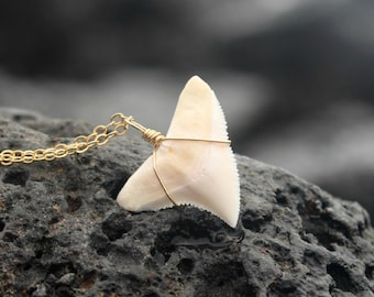 The Koa Necklace, Large Curved Modern Shark Tooth Necklace, Genuine Shark Tooth Necklace, Gold Shark Tooth Necklace, Surfer Mano Warrior
