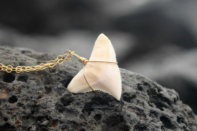 The Koa Necklace Large Curved Modern Shark Tooth Necklace image 1