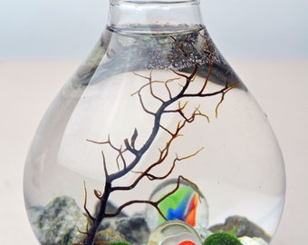 Marimo Aquatic Terrarium - Japanese Moss Ball - Teardrop Vase - Sea Fan - Marbles - Living Home Decor