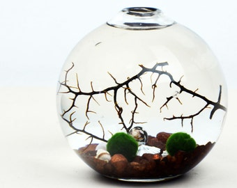 Marimo Aquatic Terrarium - Japanese Moss Ball Aquarium - Ball Vase - Brown pebbles - Sea Fan - Shells - Home and Garden