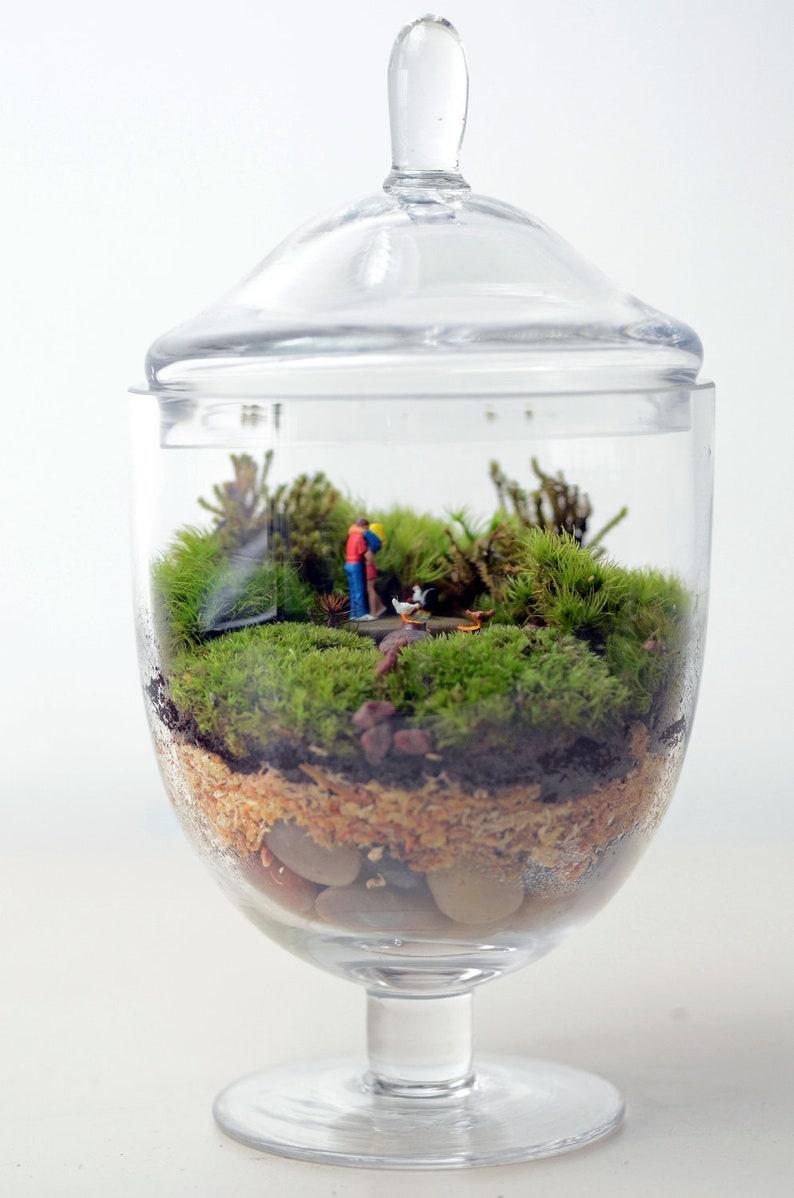 Moss Terrarium Woodland Lovers 1 Apothecary Jar Etsy