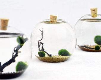 Marimo Terrarium - Japanese Moss Ball Aquarium - Bubble vase - cork stopper - Living Home Decor - Holiday Gift