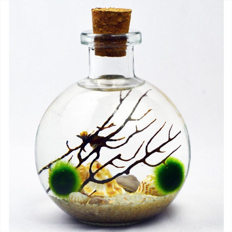 Bottle Terrarium Live Moss Ball Terrarium Japanese Moss Etsy
