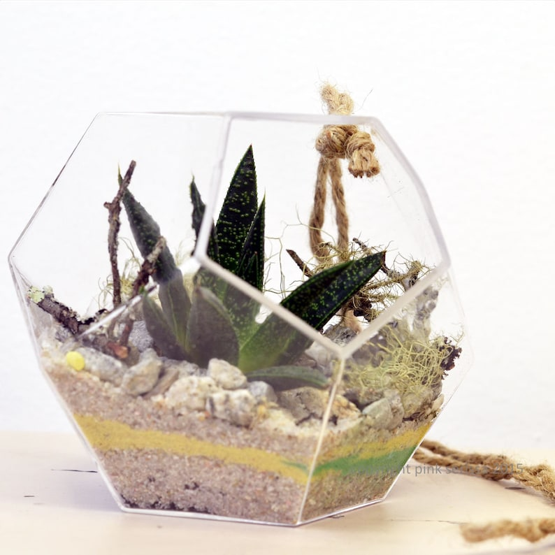 Geometric Succulent Terrarium Small Hanging Dodecahedron Etsy