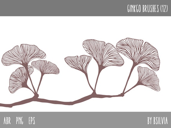 Photoshop brushes - Ginkgo Leaves , Transparent PNG digital stamps, Ginkgo Leaves Vector Files, Botanical Digital Stamps, Commercial Use