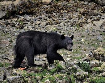 Bear Art Wild Animal Photo Print Nature Photography Woodland Decor Animal Wall Decor Nature Print Wilderness Photography Cabin Animal Art
