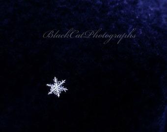 Real Winter snowflake photograph Winter Art white snowflake picture blue-black inky decor 5x7 snowflake print winter snow winter photography