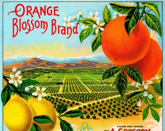 Redlands Newsboy Orange Citrus Fruit Crate Label Art Print