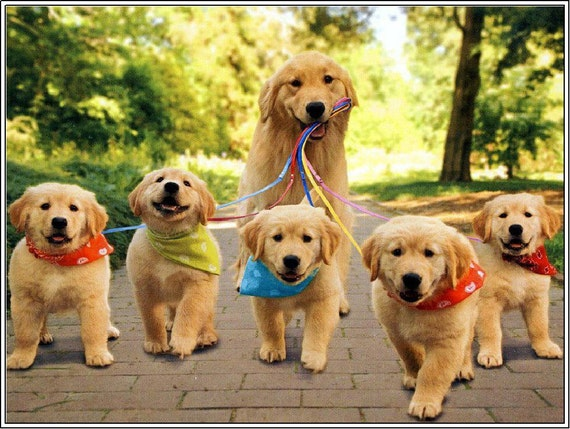4 Dog Puppy Golden Retriever Dogs Puppies 6 Greeting Etsy