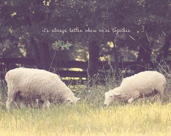 White Sheep, White Lamb, Lamb Print, Lamb Photo, Lamb Art, Lamb Gift, Lamb Photography, Sheep Print, Sheep Art, Sheep Gift, Sheep Photo