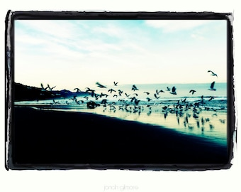 Flurry of Seagulls flying at Sunset Over Ocean Beach Fine Art Greeting Card by Jonah Gilmore