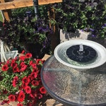 Solar fountain with LED lights.  Premium Fountain, Best Of The Best! Exclusive English Cleaning & Use Instructions Not Found Anywhere Else.