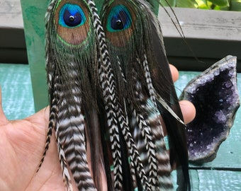 Peacock Zebra Striped Feather Earrings