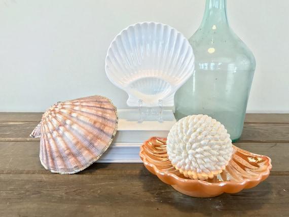 Vintage Sea Shell Jewellery Ring Dish trinket box- set of 2 trinkets jewellery storage jewellery holder