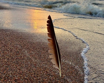 Resilient, seascape, 8x12, fine art photo, signed by me