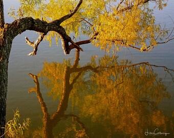 Autumn Reflections, fine art photo, signed by me