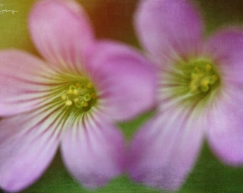 Spring Flowers, fine art photo, signed by me