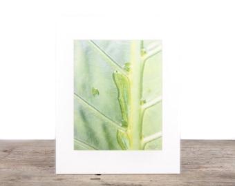 Original Fine Art Photography / Beach Photography / Leaf /  Palm Trees / Beach Gift / Beach Decor / Beach House Decorations / Ocean