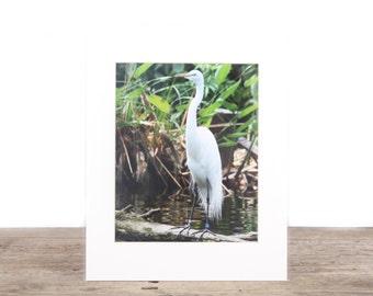 Original Fine Art Photography / Nature Photography / White Bird Art Decor Gift / Signed Photography / Photography Prints / Color Photography