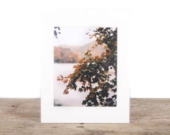 Original Fine Art Photography / Nature Photography / Fall Trees Art Decor Gift / Signed Photography / Photography Prints / Color Photography