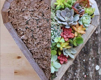 DO IT YOURSELF Succulent Heart Living Planter 13 in by 11 in Vertical Succulent Planter Birthday Wedding