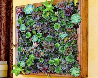 Superieur SECRET GARDEN Frame   Feng Shui Decor, Living Wall, Living Art, Zen Garden,  Cool Home Decor, Wedding Gifts, Succulents