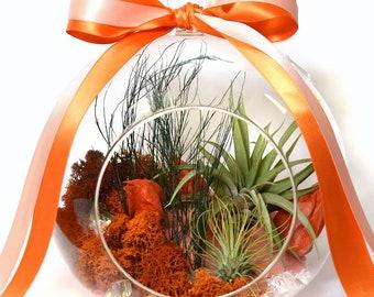 Orange Sorbet Terrarium