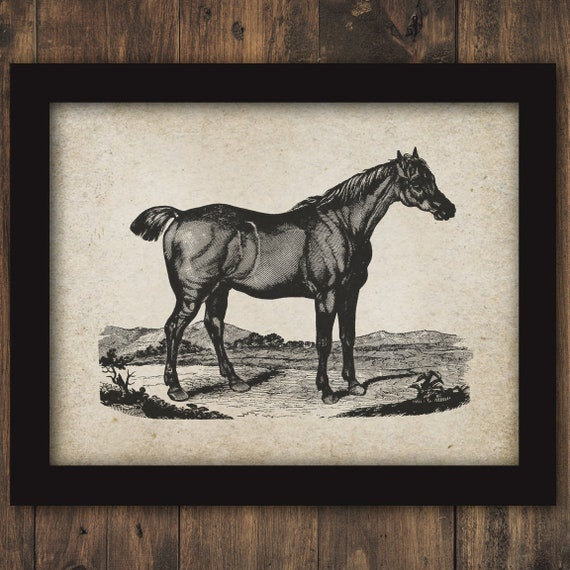 Bobtail Horse