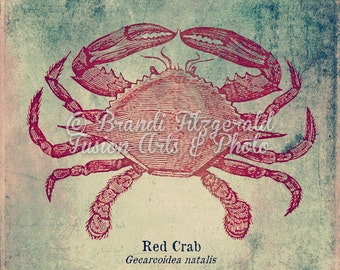 Red Crab Sea Life Beach House Decor Product Options and Pricing via Dropdown Menu