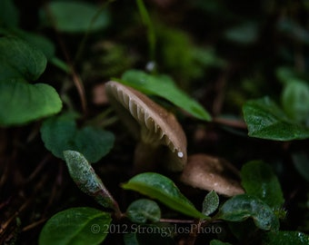 forest mushroom peaking out from green vine 8x10 photo, mushroom photography, forest floor, earthy, green, woodland photo