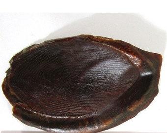 Operculum Plates, 2 Vintage Oyncha Whelk Marine Snail Protective Door Shell Plates, Science Classroom Display