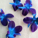 20 Purple blue galaxy orchid BLOOMS, production time, heads, blue island orchid, turquoise purple orchids