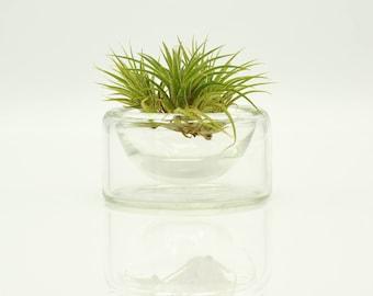 Handmade Glass Air Plant Terrarium