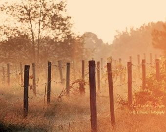Vintage morning - 8x10 Fine Art Photograph - Landscape