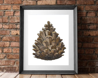 Giclee Art Print | Pinecone | Various Sizes Available