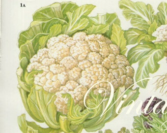 Vintage Botanical Print Antique CAULIFLOWER 159, plant print botanical print, bookplate art print, vegetables plants plant wall