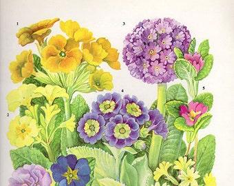 Botanical WILD FLOWERS HERBS Flower Print 15 Flower medium artwork plants print Cottage Decor Wildflower Vintage Botanical Print 1960s