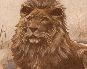 1912 Antique print, LION TIGER wall art vintage color photogravue illustration chart