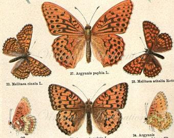 1890 Butterfly Print, Vintage Antique Book Plate print, 11 butterflies nature art illustrations